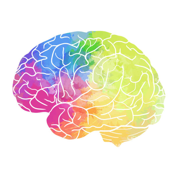 Human brain with rainbow watercolor spray on a white background Human brain with rainbow watercolor spray on a white background. Vector element for your design brain stock illustrations