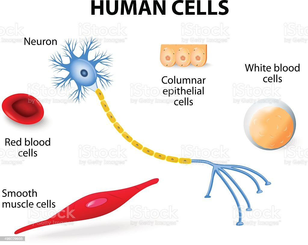 Human cell collection vector art illustration