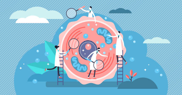 Human cell vector illustration. Tiny stylized microbiology persons concept. Human cell vector illustration. Flat tiny stylized microbiology persons concept. Scientists examine and research life blocks structure. Laboratory for basic structural, functional and biological unit. mitochondrion stock illustrations