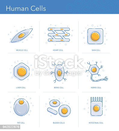 Trendy icons representing different human cells types.