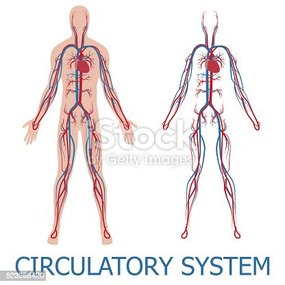 istock human circulatory system 523268420
