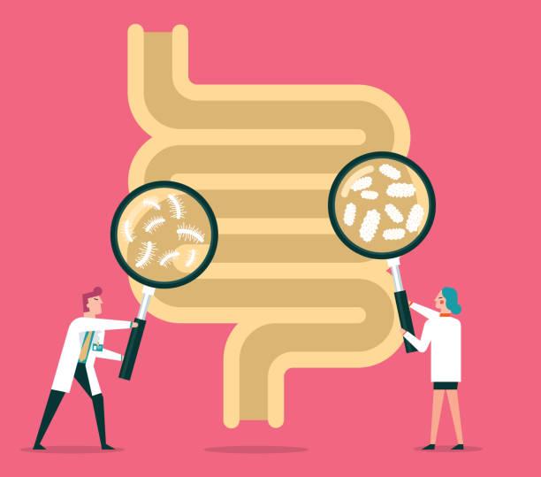 ilustrações, clipart, desenhos animados e ícones de sistema digestivo humano - abdome