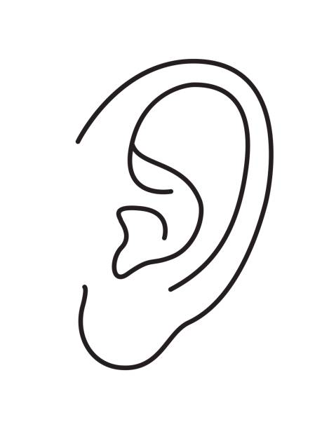 Human ears clipart black and white - photo#34