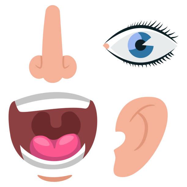 menschliche ohr, nase, augen und mund vektor flach-icons isoliert auf weißem hintergrund. - farbwahrnehmung stock-grafiken, -clipart, -cartoons und -symbole