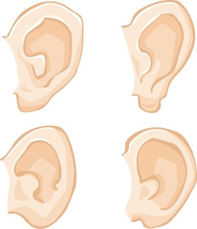 Human Ears - Illustration