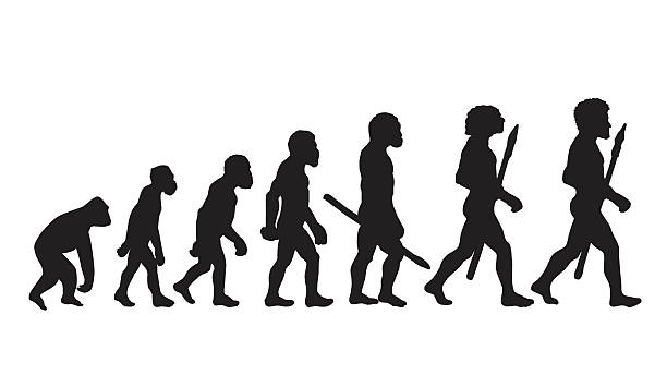 illustrazioni stock, clip art, cartoni animati e icone di tendenza di silhouette evoluzione umana. illustrazioni storico. - man evolution