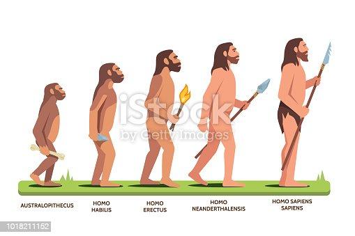 Human evolution stages: Australopithecus, Homo Habilis, Erectus, Neanderthalensis, Homo Sapiens Sapiens. Darwin evolution theory visual aid. Man progression stages. Flat vector character illustration isolated on white background.