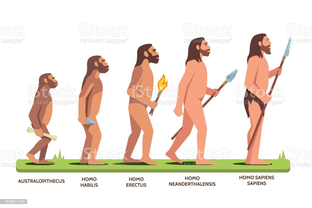 Human evolution stages from Australopithecus to Homo Sapiens Sapiens. Flat vector clipart illustration. vector art illustration