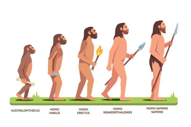 人類進化階段從古猿到智人。平面向量剪貼畫插圖。 - 進展 幅插畫檔、美工圖案、卡通及圖標