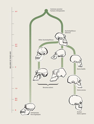Human Evolution Stock Illustration - Download Image Now