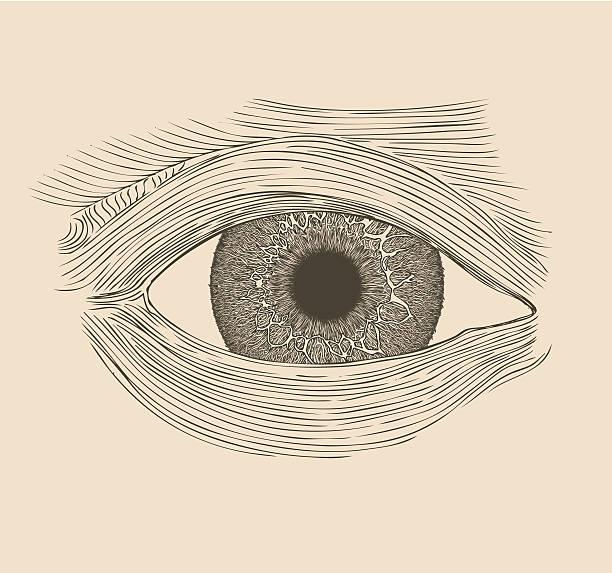 Human eye illustration. vector art illustration