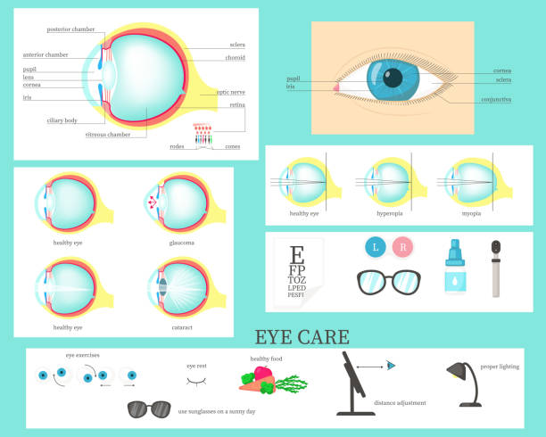 human eye infographic, vector flat isolated illustration - сетчатка stock illustrations