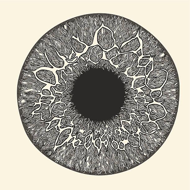 Human eye. Iris and pupil. vector art illustration