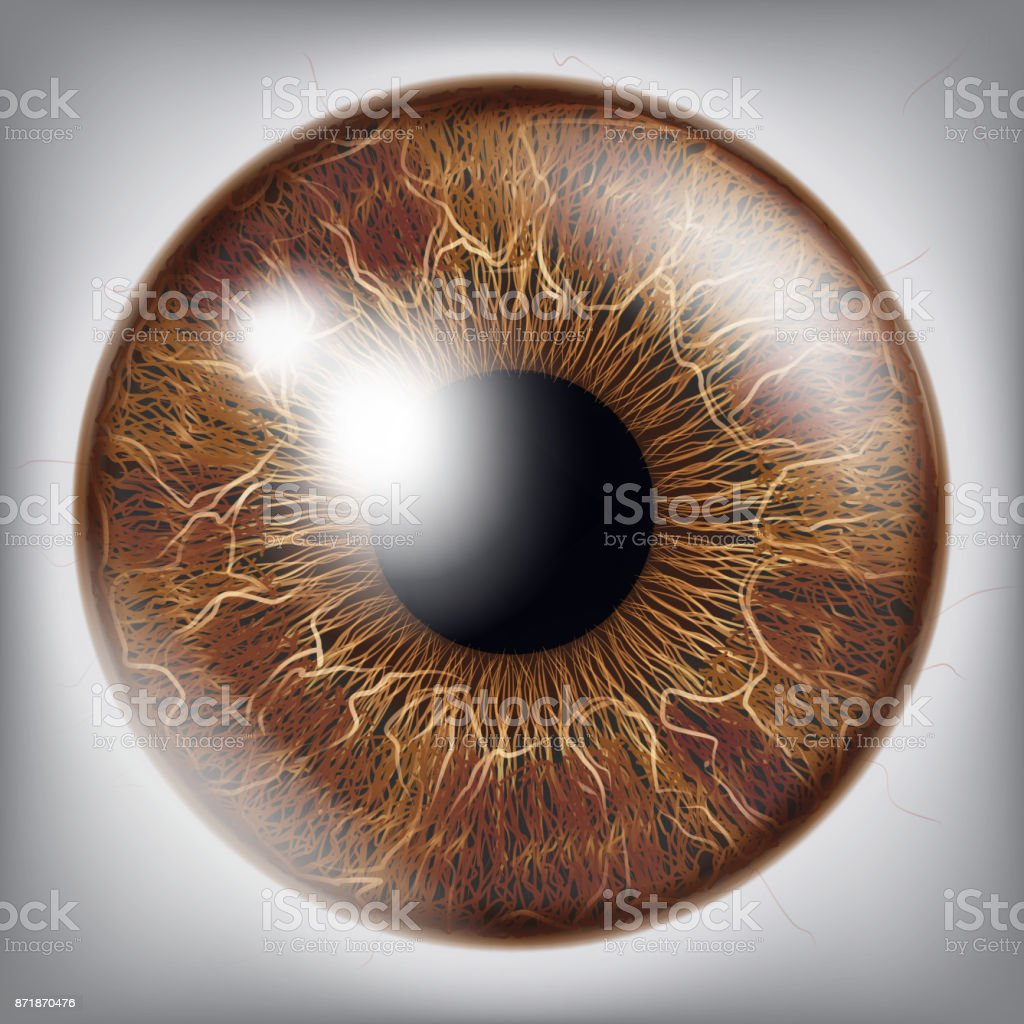 Royalty Free Iris Eye Clip Art Vector Images Illustrations Istock