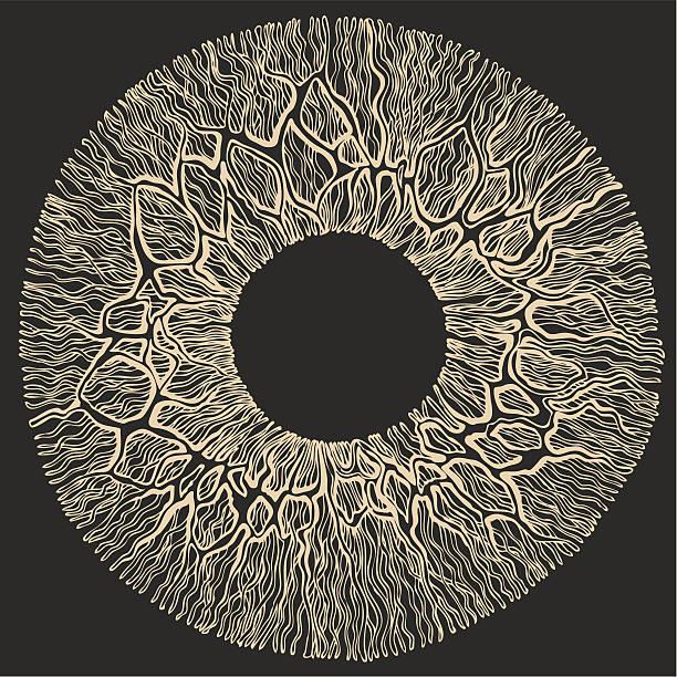 Human eye surface. vector art illustration