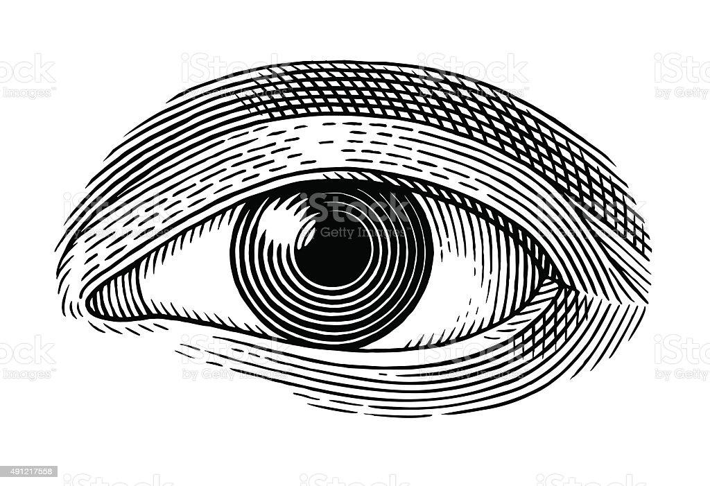 Menschliches Auge – Vektorgrafik