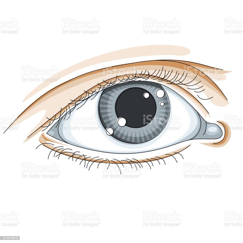 Menschliche Auge Vektorillustration Isoliert Auf Weißem Hintergrund ...