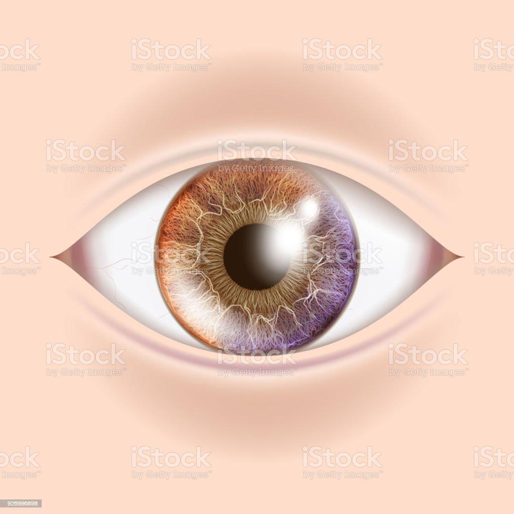 Human Eye Vector. Optometrist Check. Organ Test. Realistic Anatomy Illustration vector art illustration