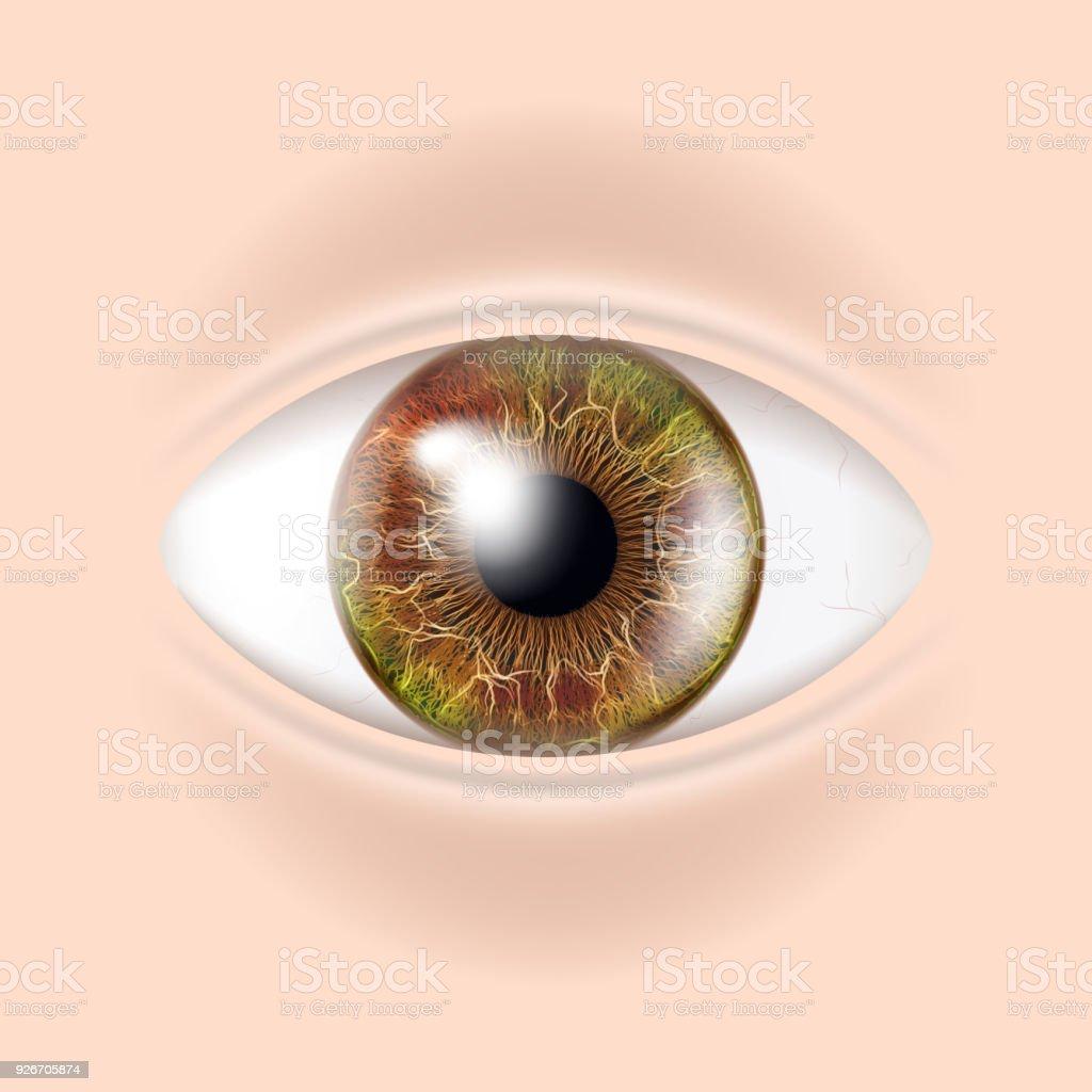 Vector De Ojo Humano Examen Visual Control Del Cuerpo Ilustración De ...