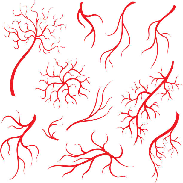 Human eye veins or vessel, red capillaries, blood arteries isolated set vector art illustration