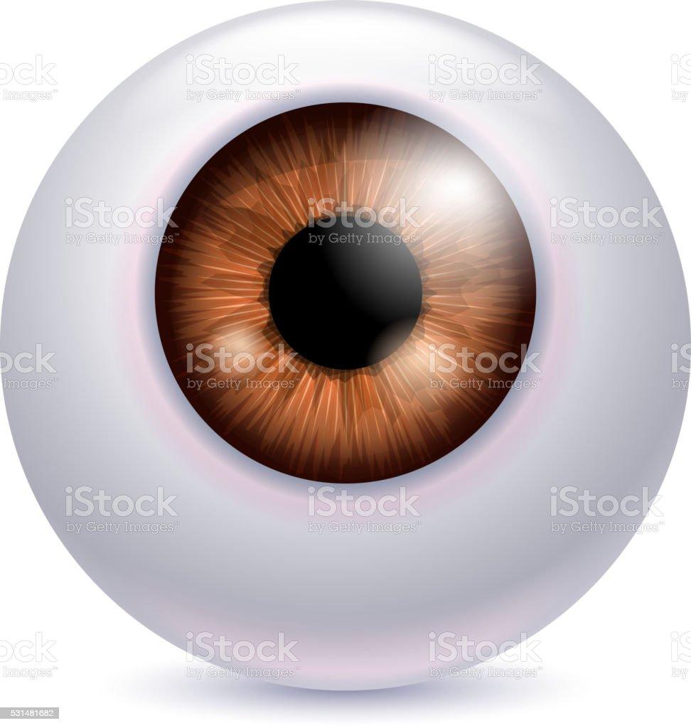 Tolle Auge Anatomie Iris Galerie - Menschliche Anatomie Bilder ...