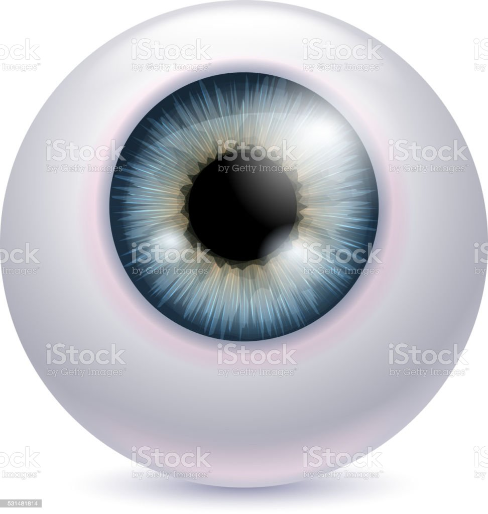 Human Eyeball Iris Pupil Gray Color Stock Vector Art & More Images ...