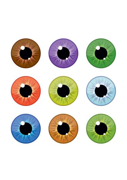 Royalty Free Eye Color Clip Art Vector Images