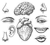 Human face and organs