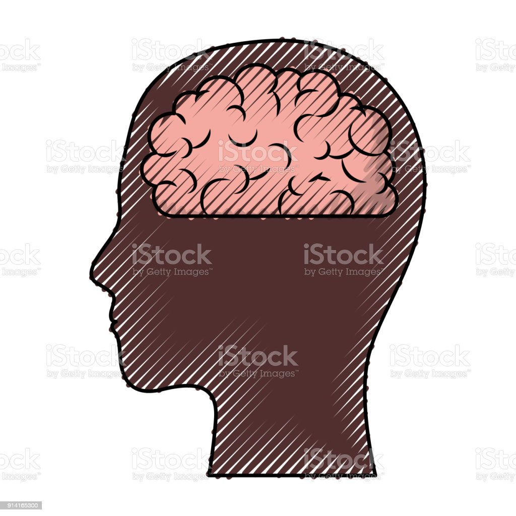 human face brown silhouette with brain inside in colored crayon silhouette  royalty-free human face