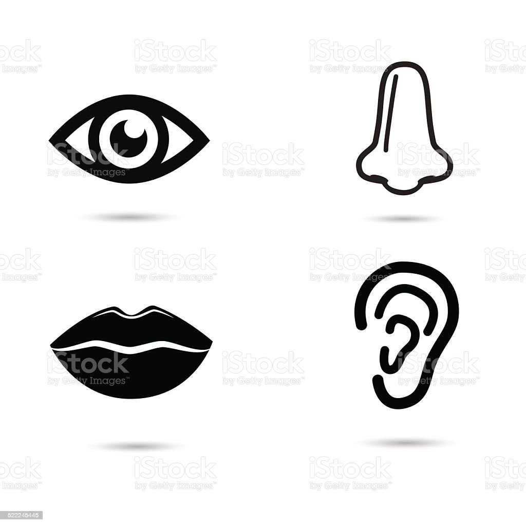 Human face parts. vector art illustration