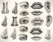 Human Features - Eye, Mouth, Ear, Nose