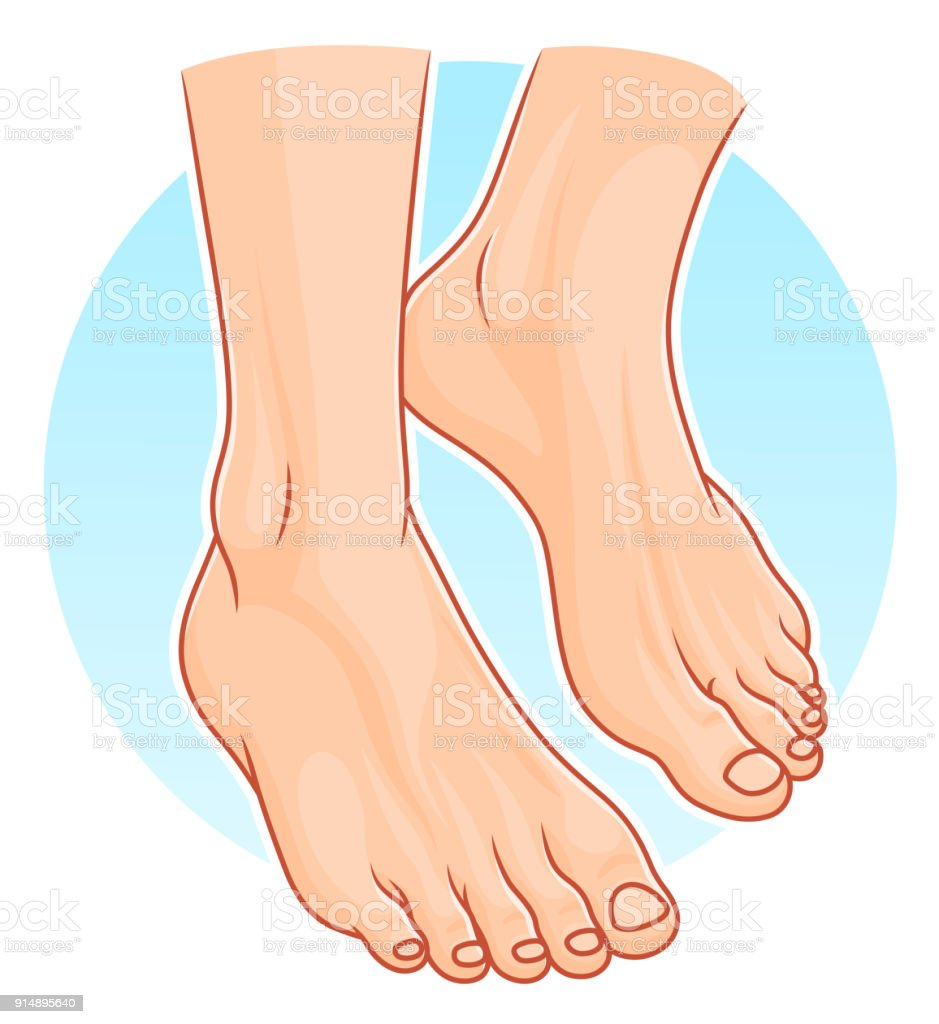 Human Feet Illustration Stock Vector Art More Images Of Anatomy