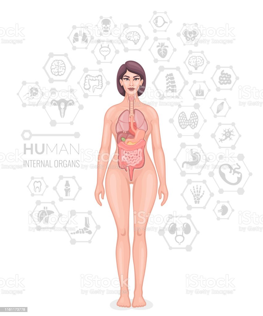 Human Female Body Vector Stock Illustration Download Image Now Istock