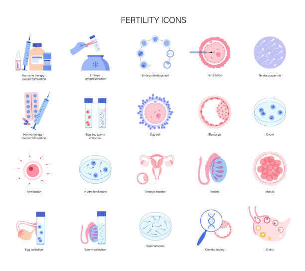 Human fertility In vitro fertilization set. Embryo development stage. Egg cell icon. Sperm collecting, processing in lab. Gene testing and cyropreservation concept. Medical poster for clinic. Flat vector illustration human blastocyst stock illustrations