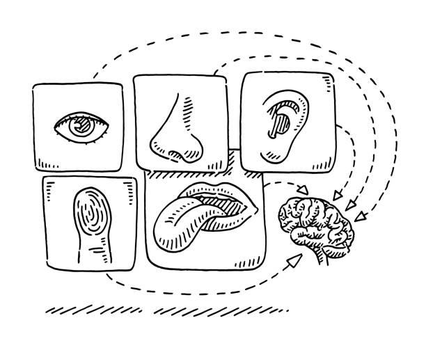 Human Five Senses Brain Infographic Drawing vector art illustration