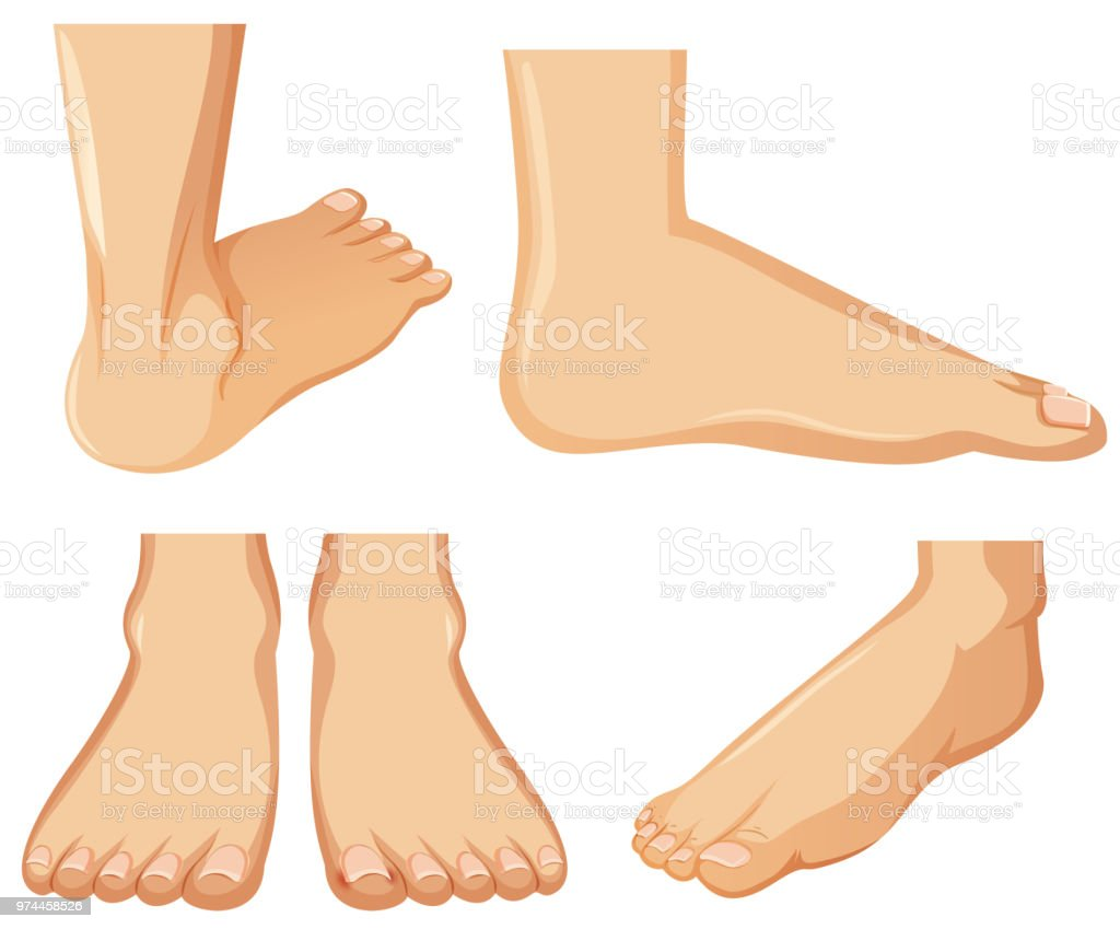 Human Foot Anatomy On White Background Stock Vector Art & More ...