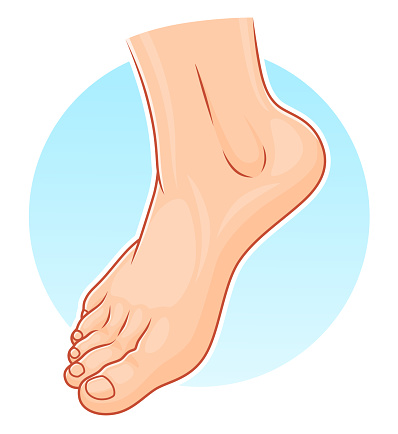 Podiatry stock illustrations