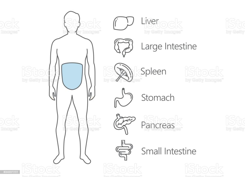 Menschlichen Magendarmsystemscan Vektor Illustration 834537222   iStock