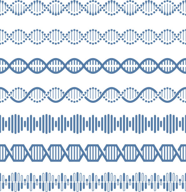 Human genome structural model dna vector seamless pattern brushes Human genome structural model dna vector seamless pattern brushes. Helix structure dna, research human genome, vector illustration genetic research stock illustrations
