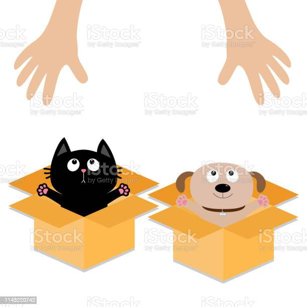 Human hand dog cat inside opened cardboard package box ready for a vector id1143220742?b=1&k=6&m=1143220742&s=612x612&h=ux1osbcxdpp7jxrarydwufwuxyjquusjlodjw4gwx7k=