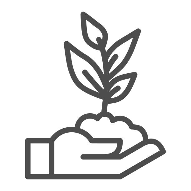 Human hand holds seedling with leaves line icon, agriculture concept, sprout with handful of soil on hand sign on white background, palm holds plant icon in outline style. Vector graphics. Human hand holds seedling with leaves line icon, agriculture concept, sprout with handful of soil on hand sign on white background, palm holds plant icon in outline style. Vector graphics scooping stock illustrations