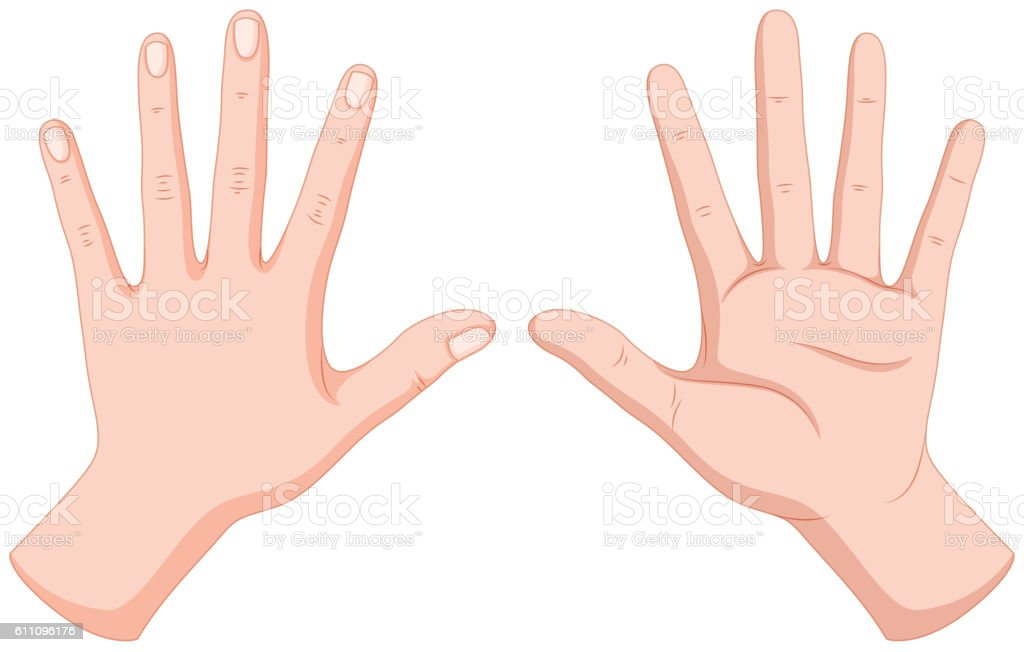 Human Hands Back And Front Stock Vector Art & More Images of Anatomy ...