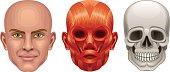 Human head anatomy