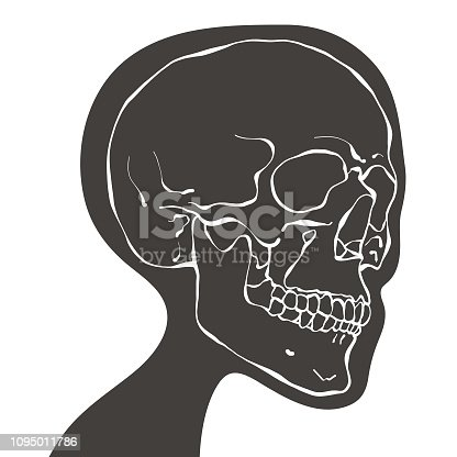 Vector illustratiion of a human head skull