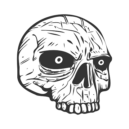 Human head skull