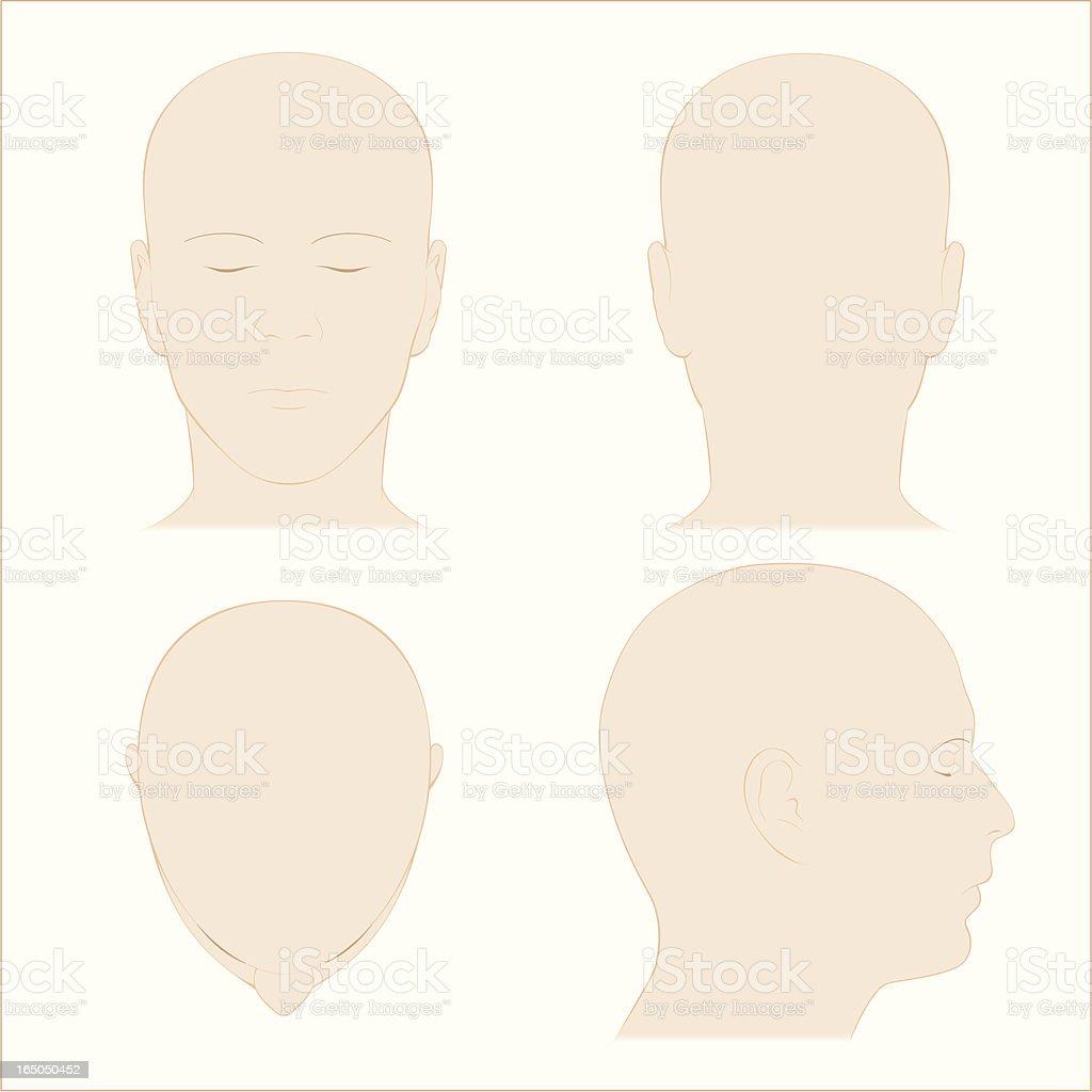 Menschlicher Kopf Oberfläche Anatomiefarbe Stock Vektor Art und mehr ...