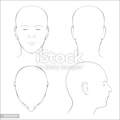 Front, back, top and profile views of the surface anatomy of the human head in outline.  Includes EPS, AI CS2 and hi-res JPG.