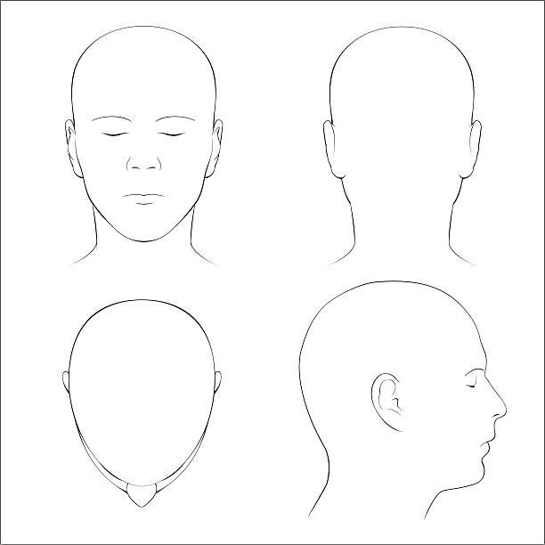 stockillustraties, clipart, cartoons en iconen met human head surface anatomy - outline - menselijk hoofd