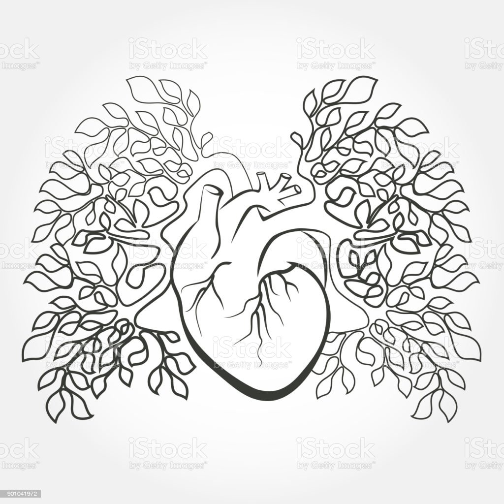 Human Heart And Lungs Like A Tree Branch Stock Vector Art & More ...