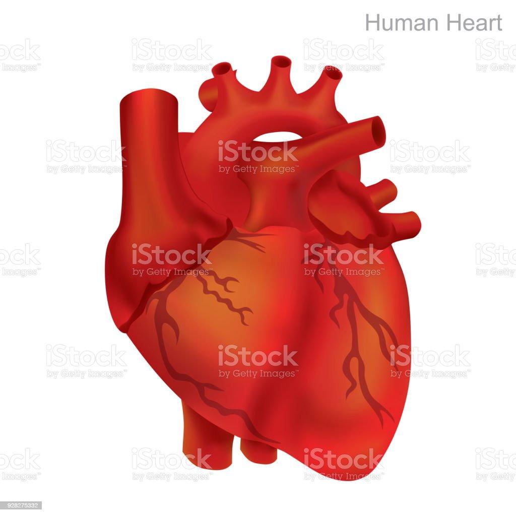 human heart balloon angioplasty illustration stock vector art more
